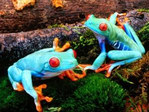 large_grenouilles_1ce30a