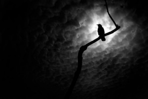 night-bird