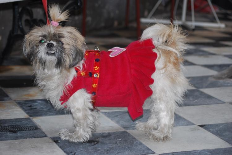 le-chien-habille-1129494227-1346170